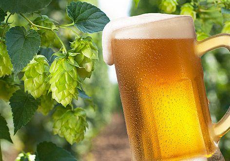 Ein frisches Bier und Hopfen
